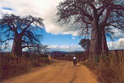 Afrika na kole