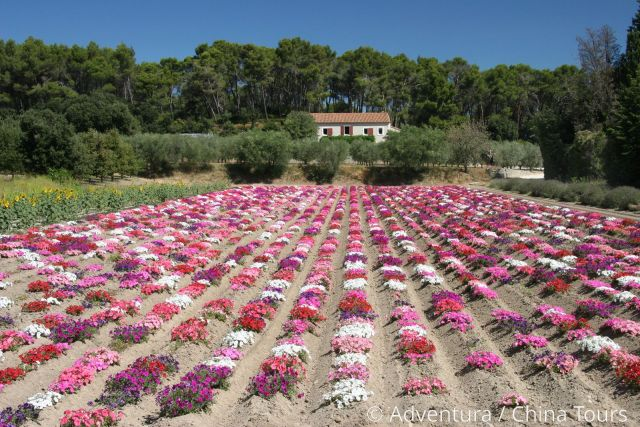 Provence májová /Babí léto v Provence