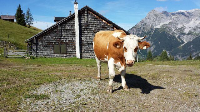Alpské toulky a termály