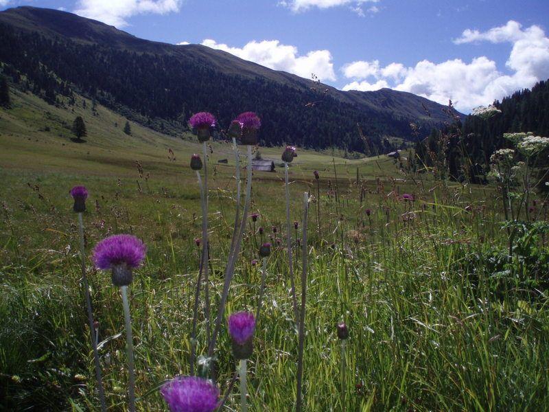 Romantika Nízkých Taur - Lungua