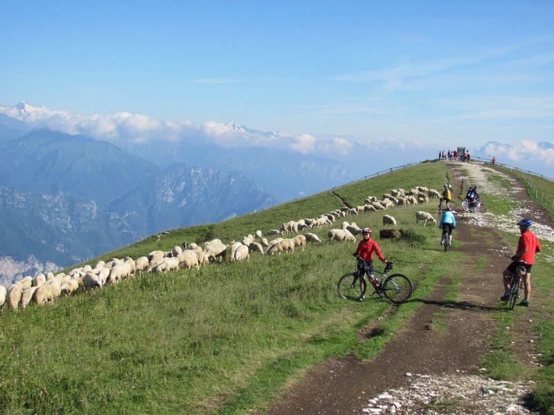 Lago di Garda = ráj mezi Alpami a Středomořím