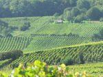Alsasko-Vinná stezka