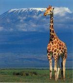 Novoroční výstup na Kilimandžáro